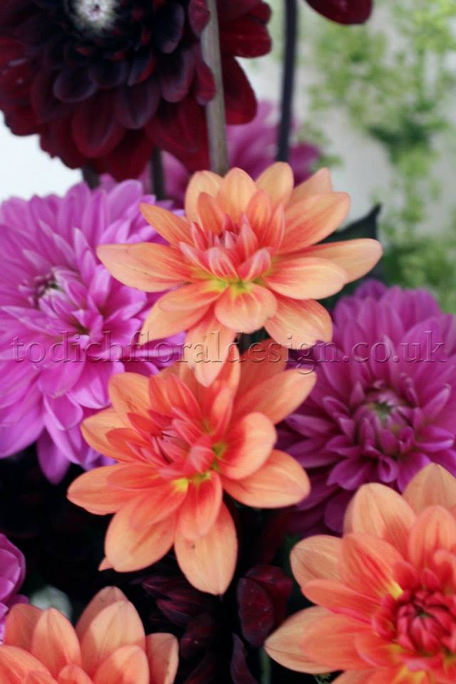 Orange and purple flower delivery UK by London florist Flower24hours