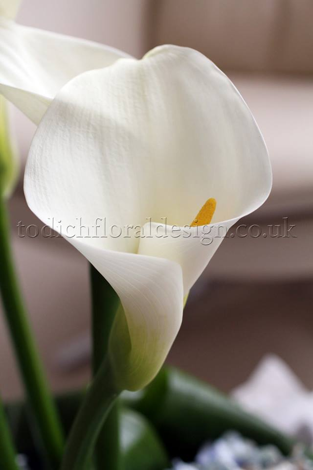 calla lilies white wedding flowers white wedding bouquets winter wedding flowers calla lily