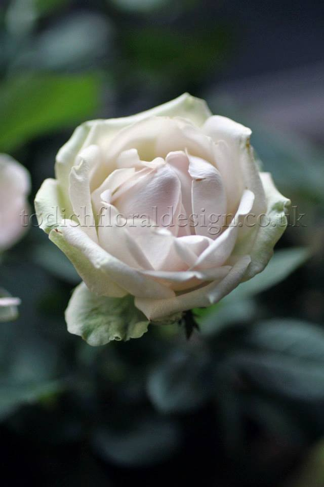roses white wedding flowers white wedding bouquets winter wedding flowers