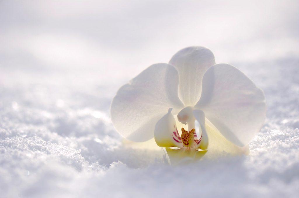 Winter wedding flowers Archives - Wedding flowers blog